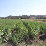 Touchstone Communities Acquires 75-Acre former Konyn Dairy Site in North San Diego County for $6 Million